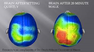 What happens to your brain on exercise?